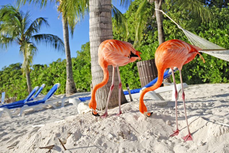 Best Holiday Locations in Aruba