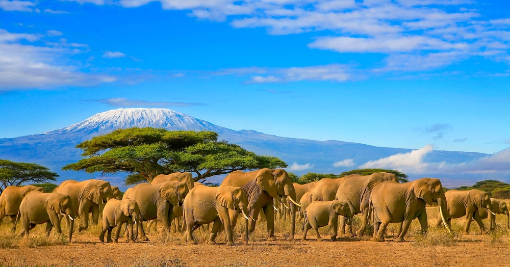 Best time of year to go on safari in Tanzania